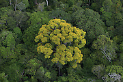 Rainforest Canopy<br /> Region 9<br /> South GUYANA<br /> South America
