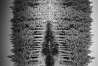 Refleksjoner.<br /> Foto: Svein Ove Ekornesvåg