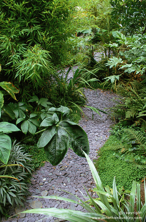 Slate path leading through exotic foliage of Astelia chathamica 'Silver Sword', bamboo, Soleirolia soleirolii, arisaema, fatsia & ferns in Declan Buckley's garden, London