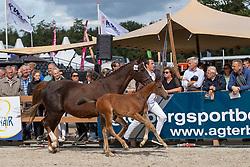 15, Olivia<br /> KWPN Kampioenschappen - Ermelo 2019<br /> © Hippo Foto - Dirk Caremans<br /> 15, Olivia