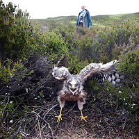 Conservation groups join forces to monitor Scotland's Raptors at an agreement signing in Pitlochry.<br />