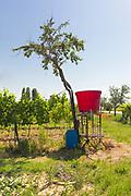 Acquaviva di Montepulciano rural landscape.