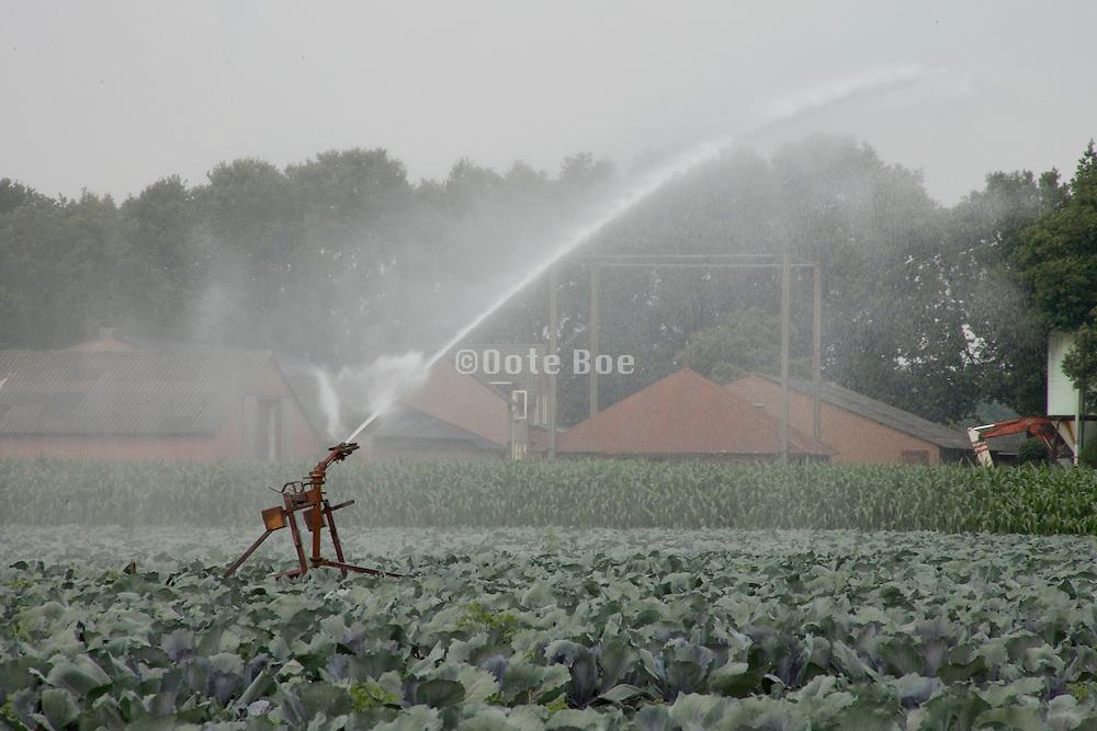 cabbage crop being watered Holland Noord Brabant