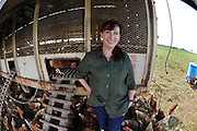 Food and science writer Maryn McKenna, a Northwestern alumna, is surrounded by pastured poultry as she works to get the story at White Oak Pastures where fifth generation farmers like Will Harris are turning to healthy and sustainable farming methods on Wednesday, Aug. 27, 2014 in Bluffton, Ga. Photo by David Tulis