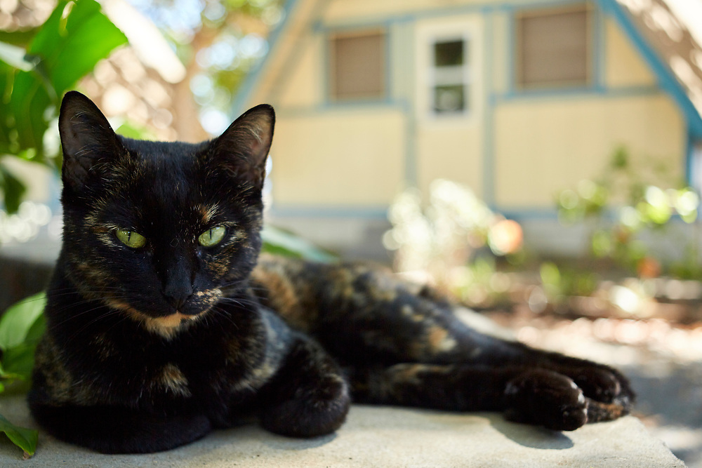 Glamping in Maui, Camp Olowalu, Resident Cat
