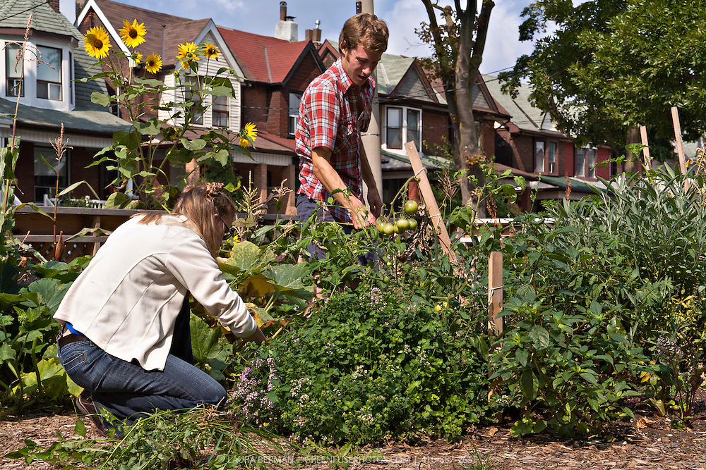 Gardeners Ian Hepburn-Aley and Rachel Van Sligtenhorst in FoodShare's community vegetable garden at 90 Croatia St., Toronto