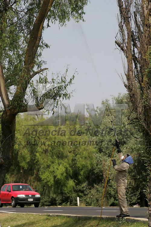 Toluca, Mex.- Personal del ayuntamiento fumiga los arboles del Paseo Tollocan ante el brote de una plaga en esta temporada de lluvias. Agencia MVT / Javier Rodriguez. (DIGITAL)<br /> <br /> <br /> <br /> <br /> <br /> <br /> <br /> NO ARCHIVAR - NO ARCHIVE