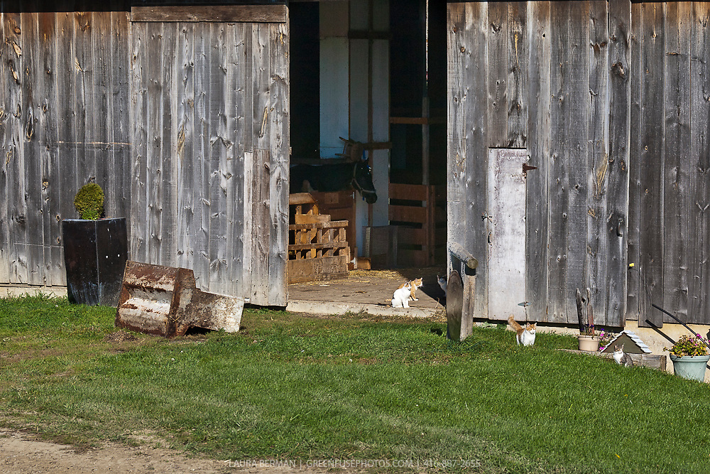 Open barn door with a group of barn cats relaxing in the sun.
