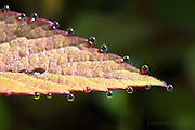 morning dew, on, new leaf, macro,close up, abstract, photo, picture, image dew drop
