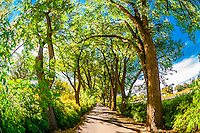 A verdant tree lined road, Los Poblanos Historic Inn & Organic Farm, Los Ranchos de Albuquerque, Albuquerque, New Mexico USA