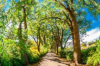 A verdant tree lined road, Los Poblanos Historic Inn & Organic Farm, Los Ranchos de Albuquerque, Albuquerque, New Mexico USA