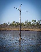 Big Branch Marsh National Wildlife Refuge
