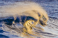 Golden sunlight shoots into the tube of a breaking wave, glistening on the smooth accelerating water. Kauai, © 2010 David A. Ponton