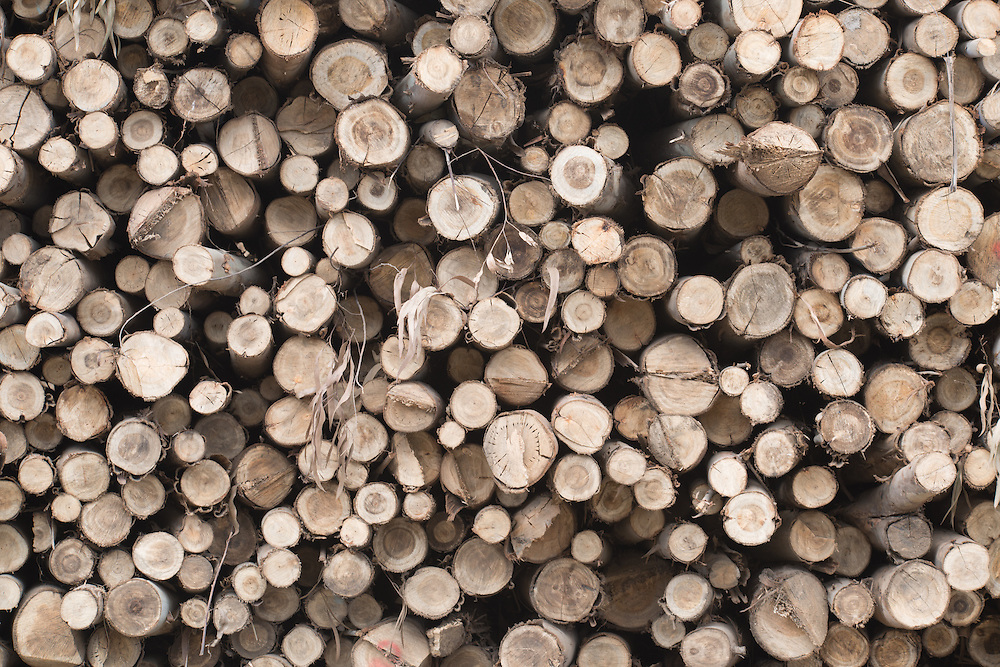 Eucalyptus wood pile