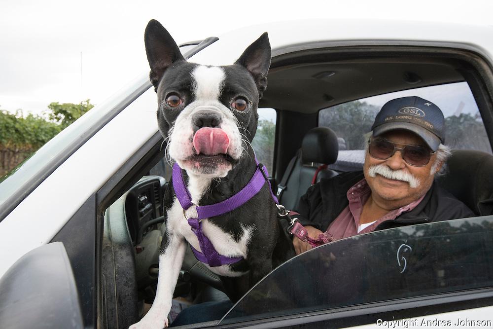 Ole with his dog Oreo, harvest for Dunham winery at Lewis Vineyard, Yakima, Washington