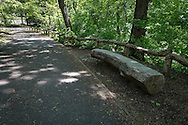 Rustic bench near Summit Hill in Central Park.