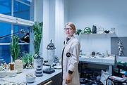 Helsinki, Iittala Arabia Design Center, designer Veera Kulju