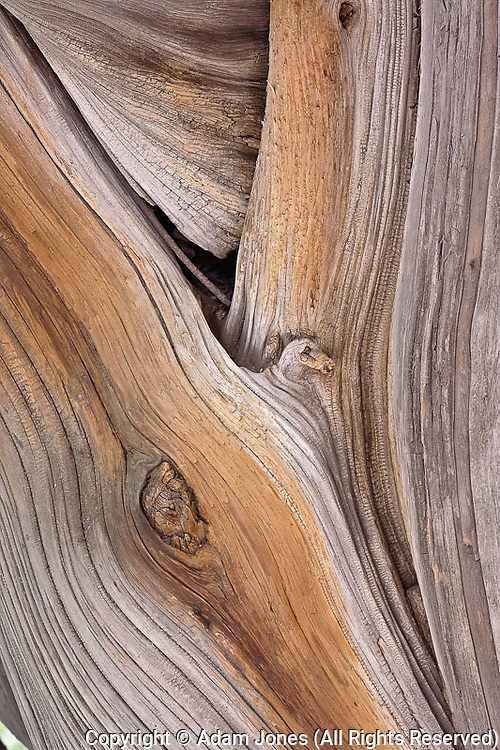 Close-up pattern of Cypress tree bark, Zhongshan Park, Beijing, China