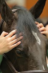 Kopfschmerzen beim Pferd