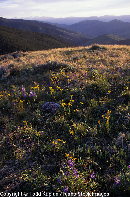Idaho, Montana, Continental divide,.Lewis and Clark, Scenic flowers, sunset, Mountains