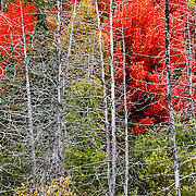 """Living Among the Dead""<br />