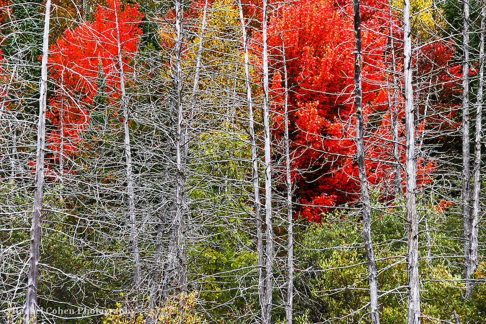 &quot;Living Among the Dead&quot;<br />
