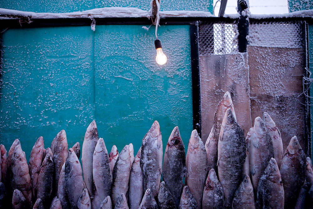 Stall with standing deep-frozen fish on the Yakutsk outdoor fish market. Yakutsk (Russian: ???????) is a city in the Russian Far East, located about 4° (450 kilometres) south of the Arctic Circle. It is the capital of the Sakha (Yakutia) Republic in Russia with a major port on the Lena River. The city has a population of 264.000 (2009). Yakutsk is one of the coldest cities on Earth. The average monthly winter temperature in January is around -43,2 °C. Yakutsk, Jakutsk, Yakutia, Russian Federation, Russia, RUS, 16.01.2010.