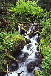 Lover's Lane near Sol Duc Falls, Olympic National Park, Washington, US