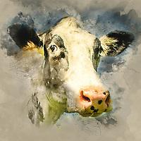 Illustration of farm cattle