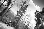 2013 Lake Mountain Bunch