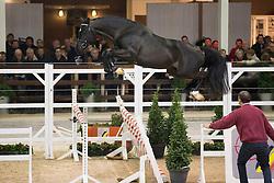 034, Nubick van het Mettenhof<br /> BWP Hengsten keuring Koningshooikt 2015<br /> © Hippo Foto - Dirk Caremans<br /> 21/01/16