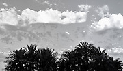 Palm trees and clouds in sky, San Diego, California USA