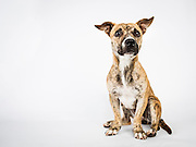 Nala.  If I didn't think adding another dog to the pack would completely upset the balance, I might have brought her home as a foster dog.  Except in our experience, foster dogs never go back to the shelter.