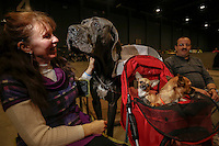 A woman sits next to her dogs at the 50th Euro Dog Show in Kortrijk, Belgium, 16 November 2013.
