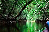 Jungle, Sarawak