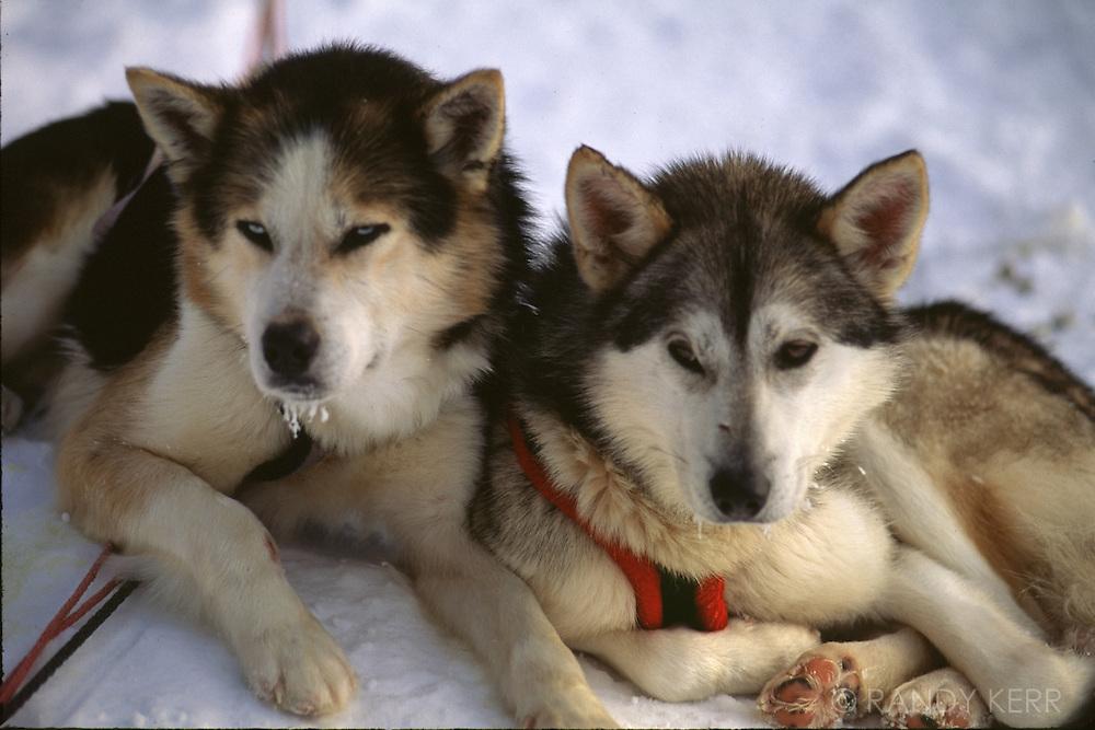 Huskies taking break