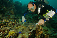 Conservation International marine biologist Mark Erdmann capturing a specimen of a new species of damselfish.  Sebakor Bay, Fak Fak Peninsula, Indonesia.