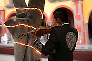 Man playing the violin under trees in main square, San Miguel de Allende, Mexico.