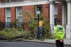 © Licensed to London News Pictures. 20/09/2018. London, UK. The scene where a tree has been blown over in high winds in Kensington, West London, hitting a residential building, causing damage and breaking a window. Parts of the UK have been battered by Storm Ali.Photo credit: Ben Cawthra/LNP