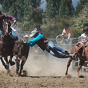 Greg Lamb from Gore in action during the Open Steer Wrestling competition at the Wanaka Rodeo. Wanaka, South Island, New Zealand. 2nd January 2012