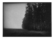 Tree line borders Russian pasture, Near Vladimir, Russia.