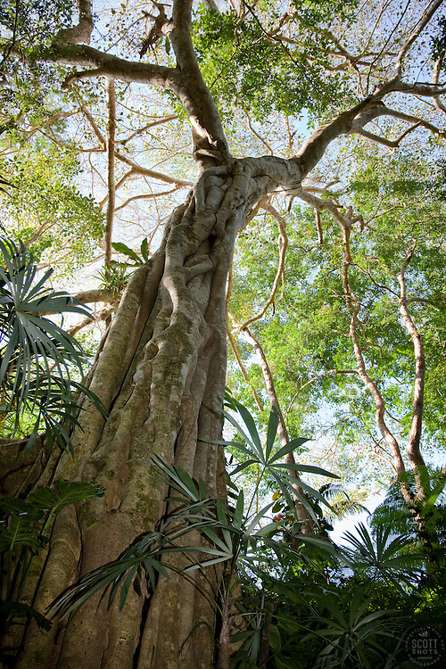 """Tall Tree"" - This cool tall tree was photographed in Puerto Vallarta, Mexico"
