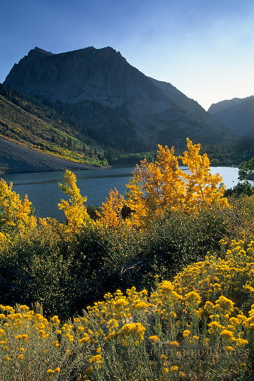 Fall colors along Lundy Lake, Lundy Canyon, Eastern Sierra Mono County, CALIFORNIA
