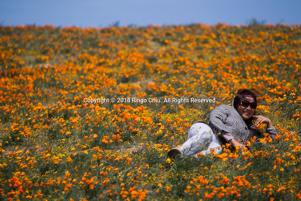 A woman poses for photography in a field of poppies near Antelope Valley in Lancaster, California, Sunday, April 27, 2014. The California poppy is the state flower. Wildflowers are showing up in massive quantities throughout desert areas in Southern California because of recent rains. (Photo by Ringo Chiu/PHOTOFORMULA.com)