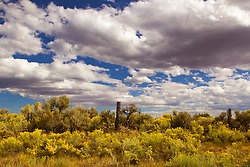 Fall colors in Abiquiu, New Mexico on a sunny day with cloud formations