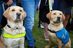 © Licensed to London News Pictures. 25/05/2016. LONDON, UK.  Photocall organised by Guide Dogs for the Blind. The charity is highlighting the daily difficulties faced by guide dogs users including taxis and businesses refusing to allow the animals inside.  Photo credit: Cliff Hide/LNP