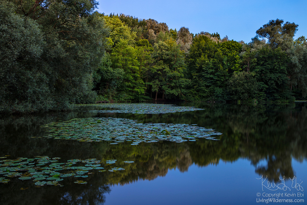 Trees lining the banks of the largest pond in Parc des Sources, or Bronnenpark, are reflected on the water at dusk in Brussels, Belgium. The public park is known for its numerous springs — called sources, in French — which provide drinking water to the surrounding area. Parc des Sources is one of six major parks that are connected in an ecological corridor in Brussles. In Dutch, Parc des Sources is called Bronnenpark.