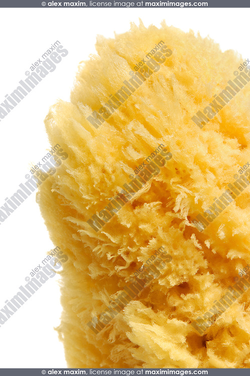 Natural sea sponge from Cyprus Isolated on white background