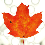 close up of fall leaf against white textured background