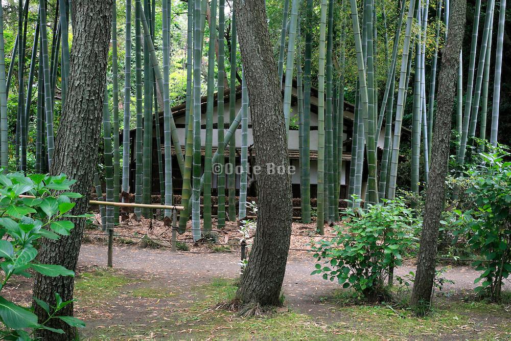 the Sankeien Japanese garden in Yokohama